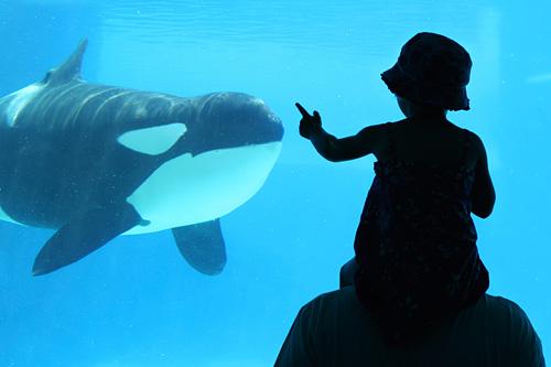 Image Gallery Orca Aquarium
