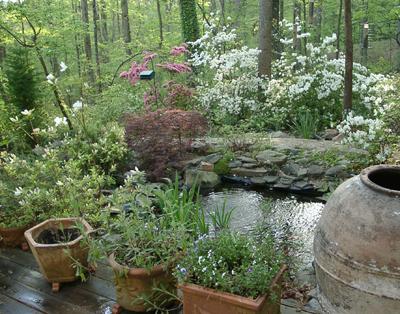 frans 39 backyard pond with spring flowers dogwood